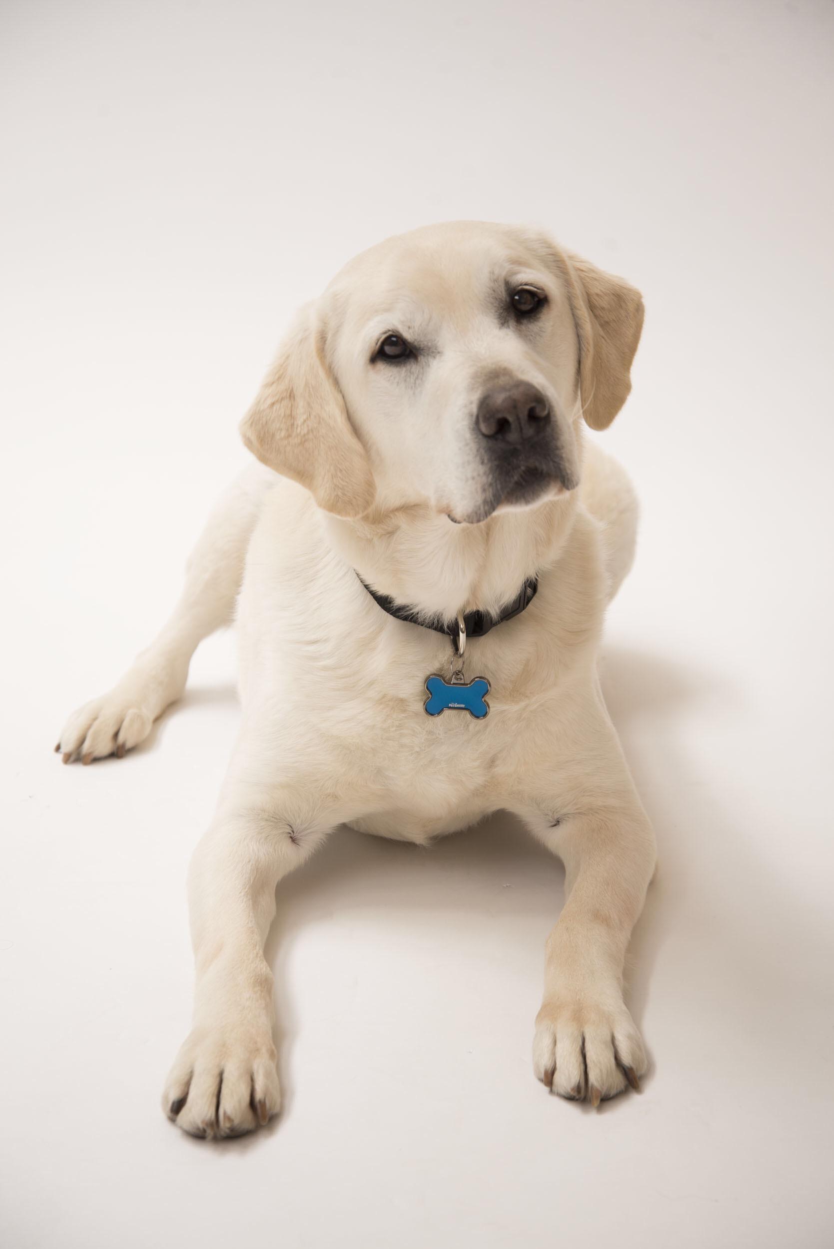 """""""ฮอลลีวู้ด ไทยแลนด์"""" เอาใจคนรักเจ้าตูบสี่ขาส่งหนังรักโรแมนติกคอมเมดี้ชวนหัวเรื่อง """"Who Get The Dog?"""" 6 ตุลาคมนี้ ฮาป่วนเมือง"""