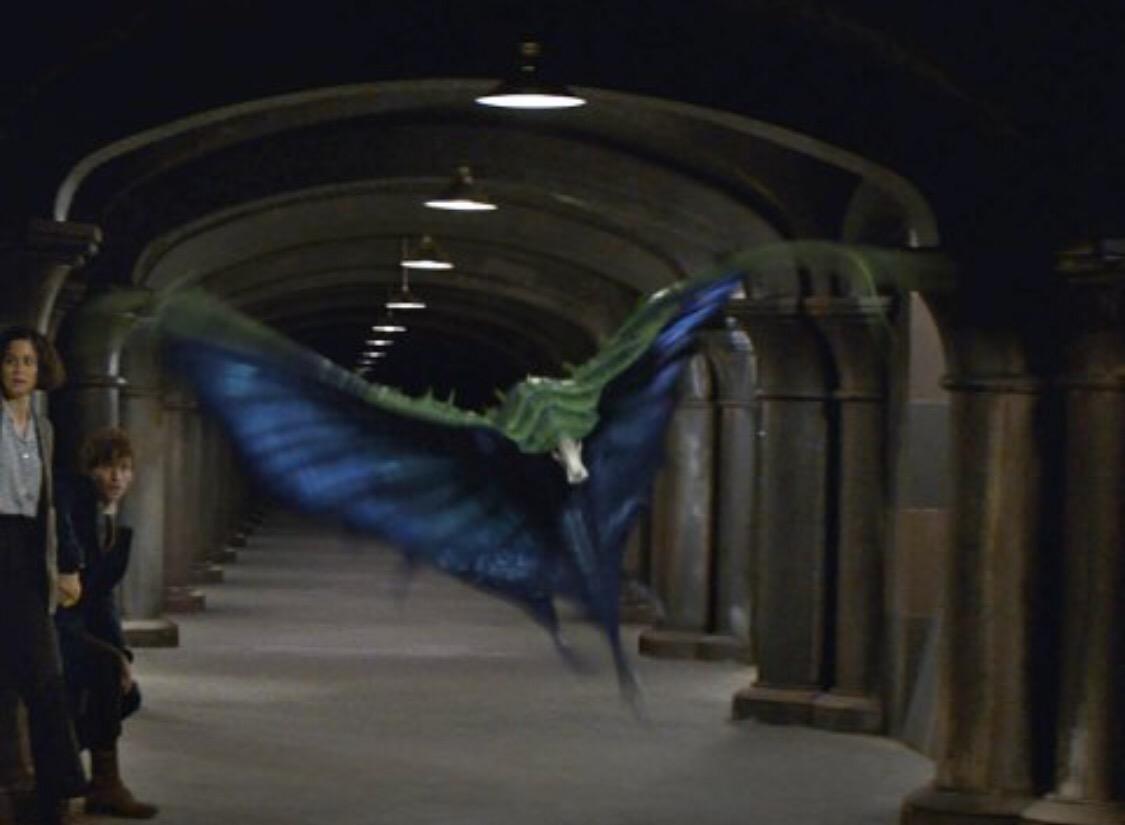 ข้อมูลสัตว์มหัศจรรย์ของโลกเวทมนตร์ Fantastic Beasts and Where to Find Themฉายแล้ววันนี้ในโรงภาพยนตร์